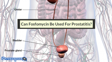 Can Fosfomycin Be Used For Prostatitis?
